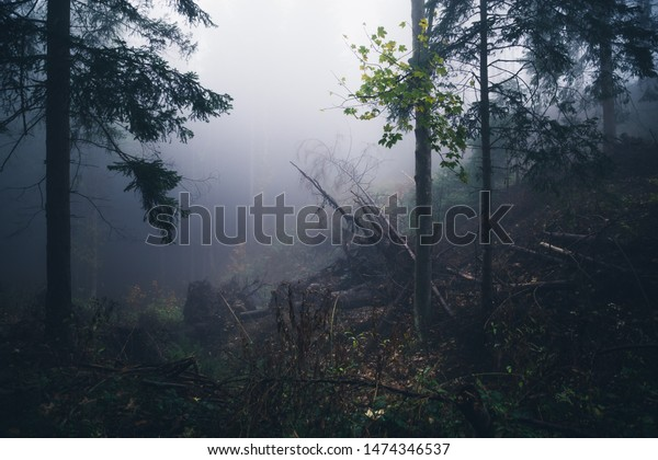 Clearing in the dark foggy forest