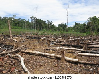 A Clearing Of Fallen Dry Tree Trunks At The Site Of Illegal Logging In The Amazon Jungle, Deforestation - Stock Photo