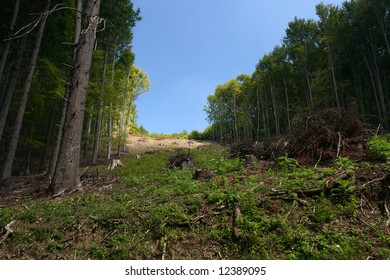 Clearing in a forest with stumps