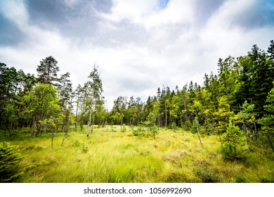 Clearing in a forest with tall green grass and a cloudy blue sky