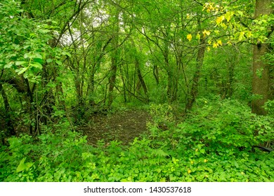 clearing in lush green landscape