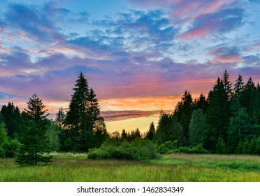 Clearing in Natural Forest after sunset