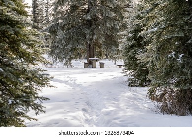 Clearing in a park leads to a snow covered picnic table. Taken in Kootenay National Park, Canada