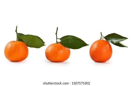 Clementine fruit leaf isolated on white background- Citrus clementina