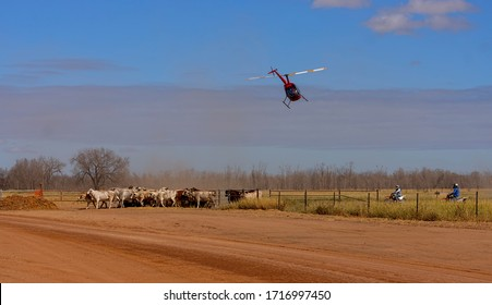 Clermont, Queensland, Australia - 04/28/2020; Panorama of modern cattle mustering with a helicopter and motorbikes instead of horses in central Queensland, Australia with copy space.