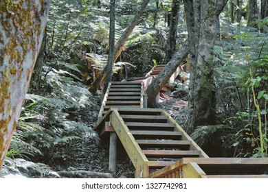 Clevedon Scenic Reserve. Stairs, elevated walkway.