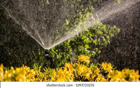 Clever garden with a fully automatic irrigation system, water azaleas.