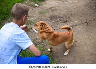 A clever red dog gives the paw to the boy.