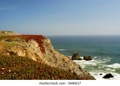 Cliff above the sea covered with red ice plants, Bodega Bay, CA