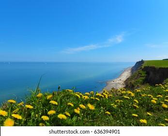 "cliff coast landscape with baltic sea and blooming dandelions in ""schwedeneck"" near by Kiel"