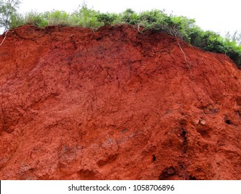 A cliff of dry red dirt along a road on Maui, Hawaii shows a crown of greenery, fresh green grass and shrubs, a interesting natural background texture.
