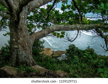 Cliff full of charms of the Atlantic Forest on the Prainha da Barra da Lagoa Trail in Florianopolis, Santa Catarina