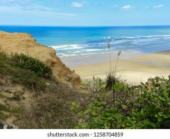 Cliff overlooking New Zealand's Ripiro Beach on a sunny day