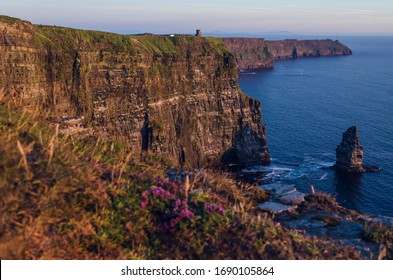 Cliffs of Moher with flowers in the front