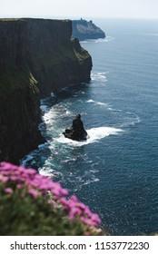 Cliffs Of Moher, Ireland, Flowers
