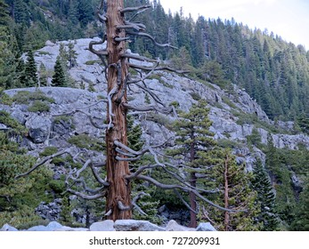 Cliffs over Emerald Cove on Lake Tahoe, studded with conifers.
