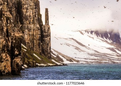 Cliffs with Thousands of Sea Birds Roosting in the Arctic Ocean off the Coast of Norway. Fog, Snow, & Ice, with SeaBirds Flying in the Sky