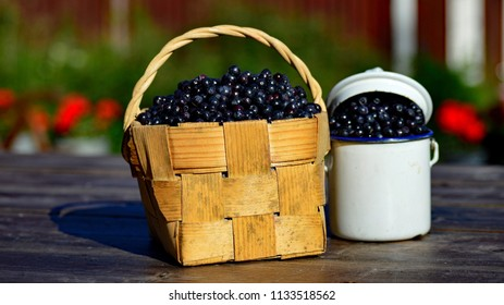 Clift basker and  old can full of freshly picked bilberries