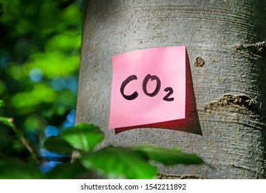 Climate change concept note on a tree