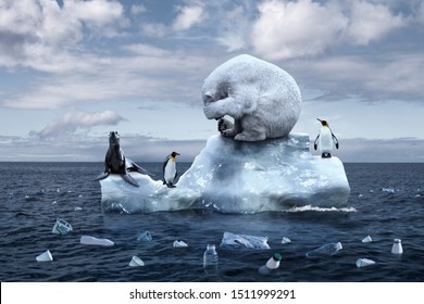 climate change. garbage patch. the bear cries closing its face with its paws. polar bear, penguins and fur seal sits on a melting glacier in the middle of the ocean. ecological catastrophy