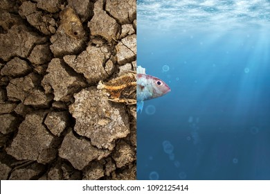 Climate Change and Global warming concept. Fish bone on cracked earth and Fish in ocean metaphor climate change impact to Aquatic Animals - Shutterstock ID 1092125414