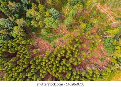 Climate Change in the Harz Dying Forest