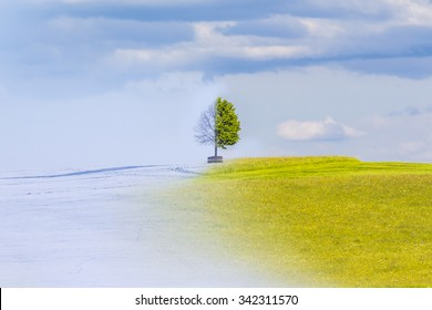Climate change from winter to summer time over the year. Nature weather visual with a single tree on a hill. Cold snow has a transition to a warm meadow. Icy branches have a transition to juicy leaves