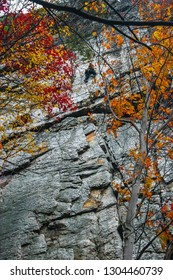 A climber ascends the steep face of Seneca Rocks in Monongahela National Forest of West Virginia. Colorful Autumn leaves surround him.