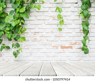 Climber plant with white brick wall background.Old brick wall with green tree.Grungy white brick wall.Dirty brick wall. On white wood floor.