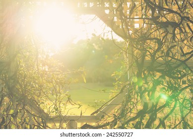 Climber vine plant stems intertwine with white wicker trellis with an opening window and sun rays or sun flare in garden indicating hope birth future happiness life divinity with retro vintage filter