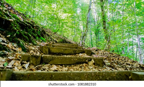 Climbing up in the forest. Uphill path. Hiking in forest. Step by step. Walking up. Hard journey. Walking against difficulties. The mountain road. Climbing wooden stairs.  Walking up on hill in forest