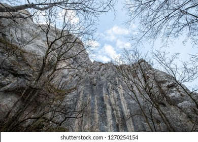 Climbing mountain wall view from the ground through the naked trees with blue sky in the background
