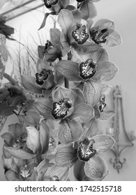Climbing Orchid black and white