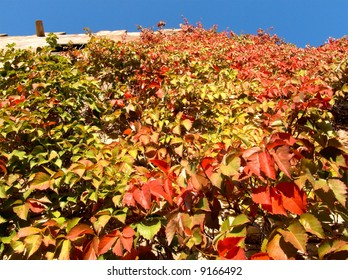 climbing plant fall