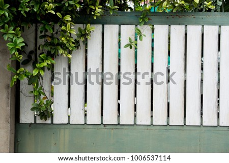 Climbing Plant On White Green Wooden Stock Photo (Edit Now ...
