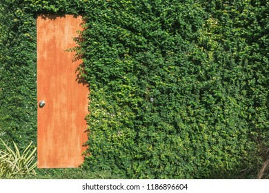 climbing plants on the wall background