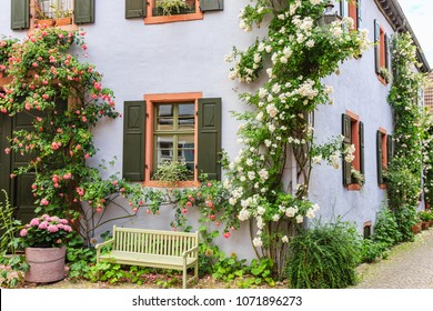 Climbing roses near old houses in the narrow medieval german street,