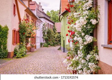 Kletterrosen in der Nähe von alten Häusern in der schmalen mittelalterlichen deutschen Straße, Deutschland