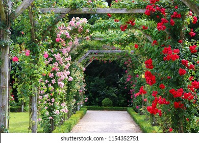 Climbing roses in a series of square archways captured on a sunny summer day.