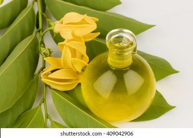 climbing ylang-ylang, climbing ilang-ilang, manorangini, hara-champa or kantali champa: essential oil or Kara Wek Fragrance (thainame).