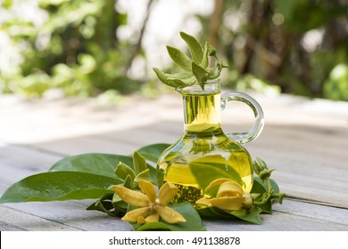 climbing ylang-ylang, climbing ylang-ylang, manoranjini, hara-champa or kanthali champa, flower and essential oil has medicinal properties.