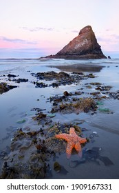 Clinging to the rocks patiently waiting for the tide to come in, a vibrant orange starfish is one of the many sea animals found in the tide pools along the coastline.
