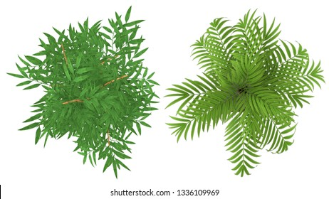 clipping path of isolate interior plants top view on white background - Shutterstock ID 1336109969