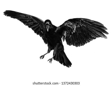 clipping photo crows