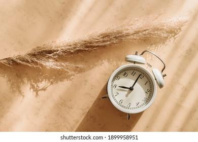 Clock alarm and pampas grass on beige background. Boho style concept. Vintage color filter