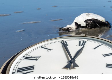 Clock with dead bird on the Sea