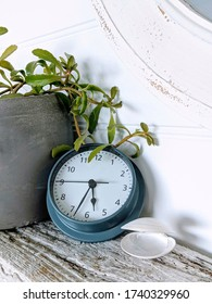 Clock on driftwood shelf with plant and shell