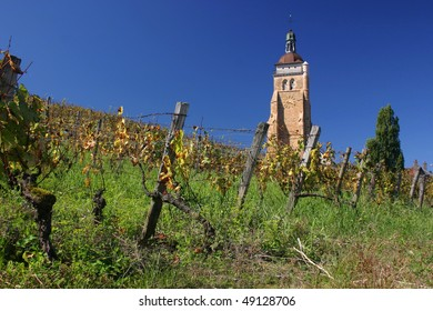 Clock tower behind the vineyard