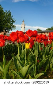 Clock tower (in Russian named Chasozvonya) of St. Sophia Orthodox Cathedral and bright blurred red tulips on the foreground in Veliky Novgorod, Russia (focus at the tower)