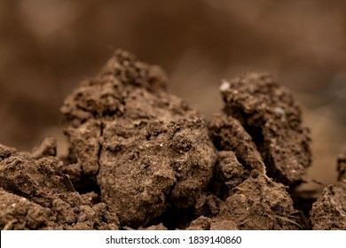 clods of brown earth nature